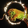 Цирки в Винзилях