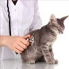 Ветеринарные клиники в Винзилях